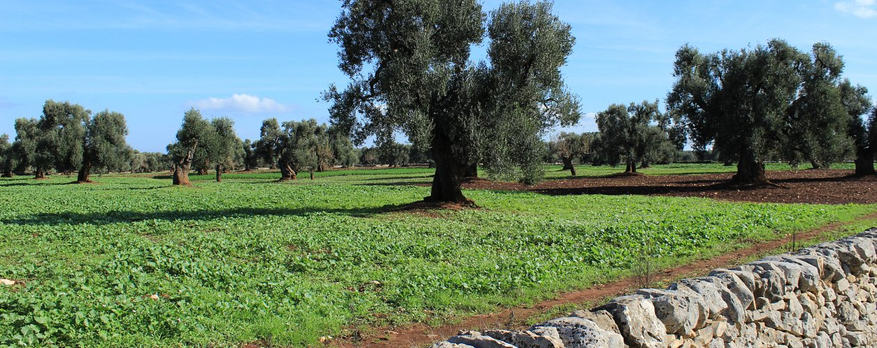 The Great Puglia Countryside